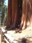 Sequoia National Park - cool hang out