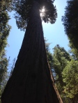Sequoia National Park - dizzying